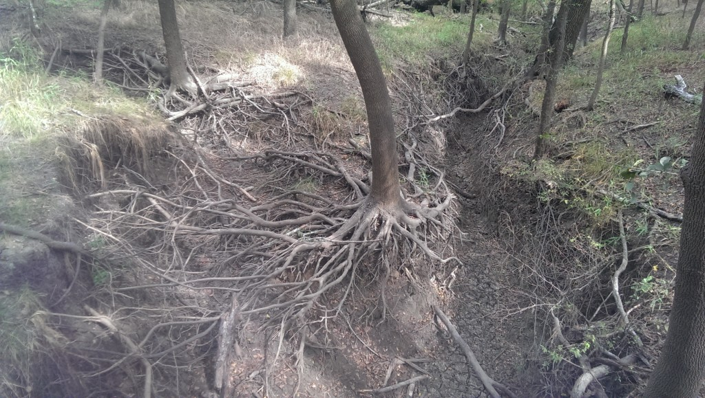 More roots.
